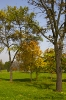 Árvores em parque sérvio