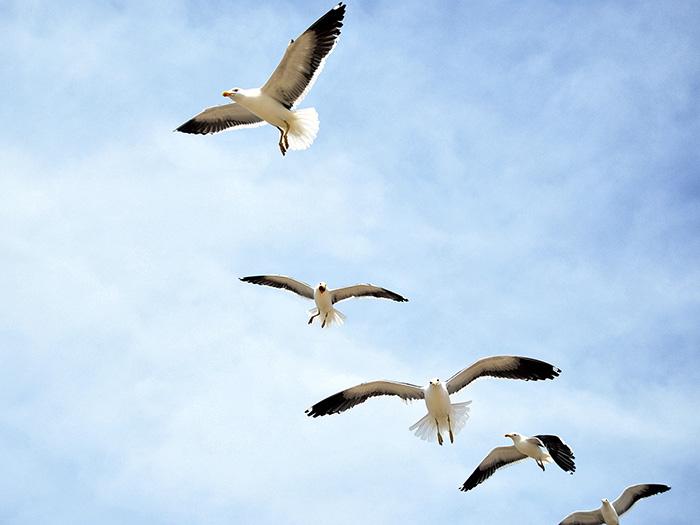 Aves em fila por Cleusa Migliorini