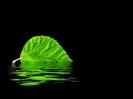 Verdes reflexos